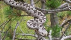 Najezda zmija ! Doznajte koje su opasne